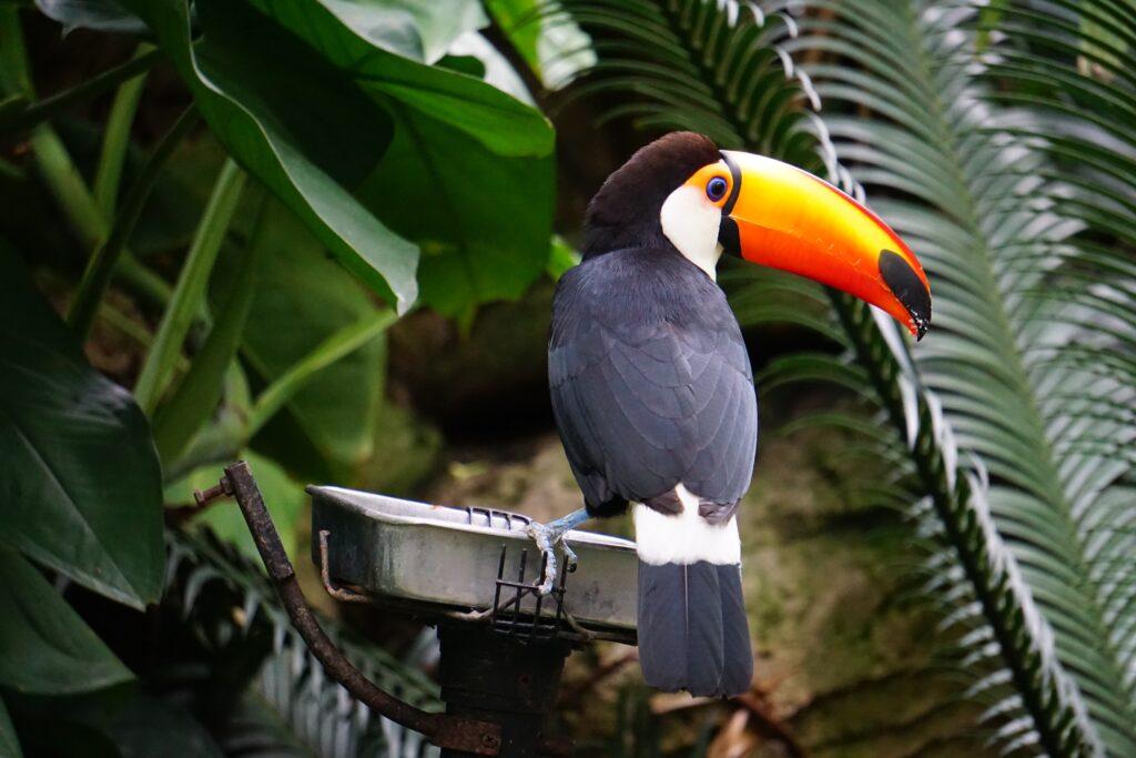 Utazás Costa Rica